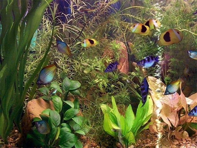 Aqua 3d Screensaver 1 51 System Themes