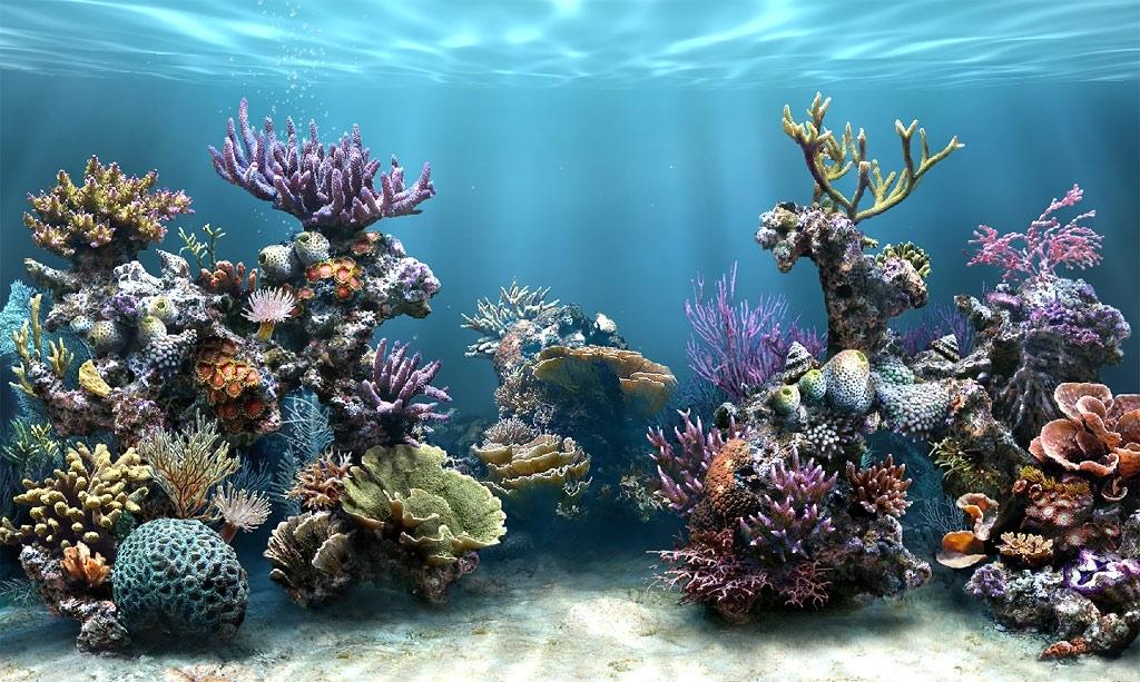 Simaquarium free screensaver 3 1 system themes - Fish tank screensaver pc free ...